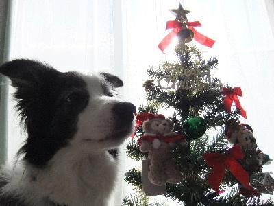 111225クリスマス.JPG